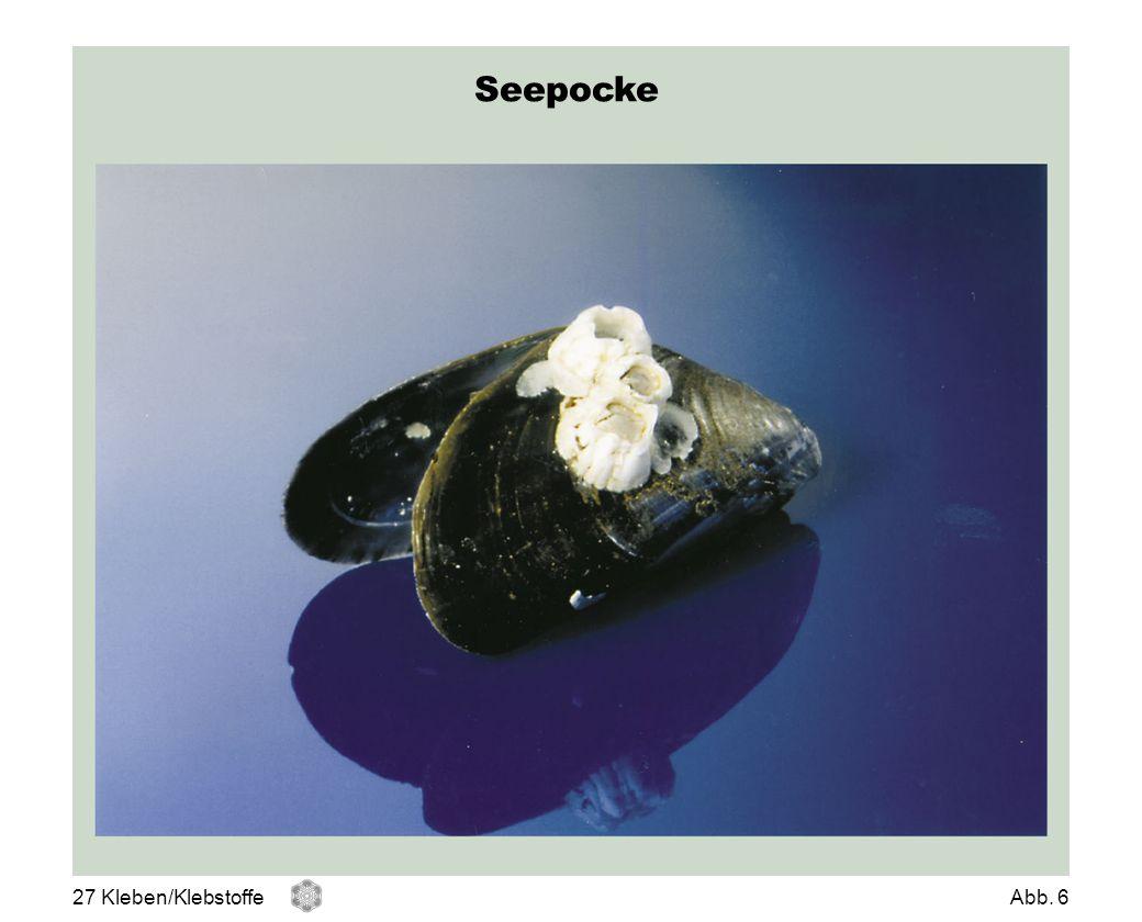 Seepocke 27 Kleben/KlebstoffeAbb. 6