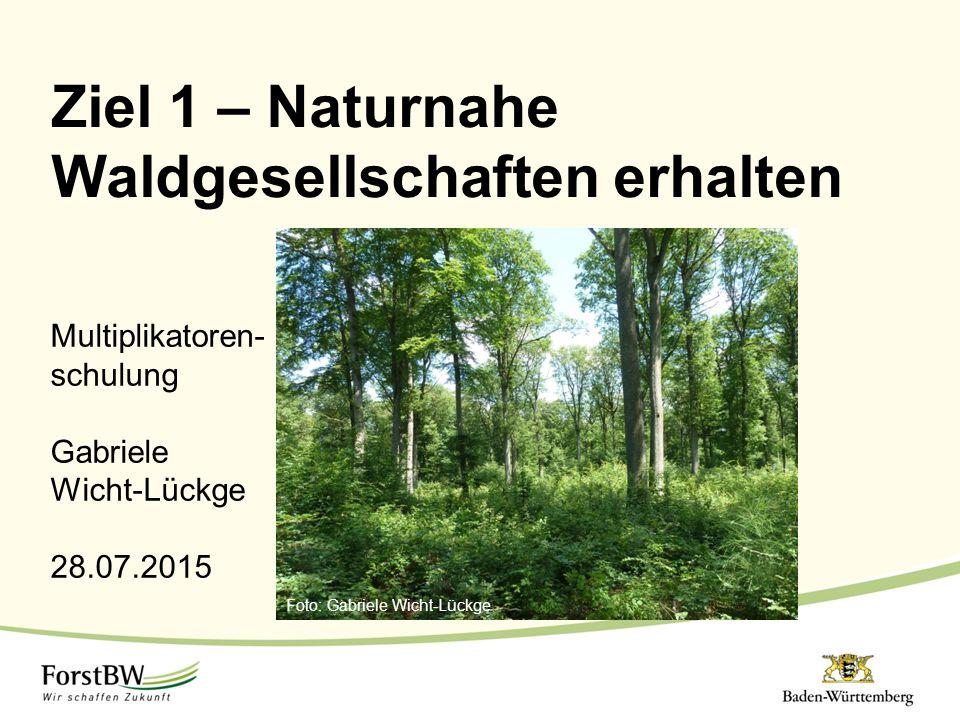 Multiplikatoren- schulung Gabriele Wicht-Lückge 28.07.2015 Ziel 1 – Naturnahe Waldgesellschaften erhalten Foto: Gabriele Wicht-Lückge