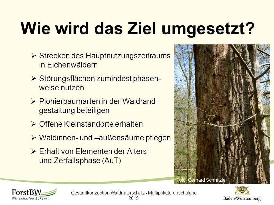 Wie wird das Ziel umgesetzt?  Strecken des Hauptnutzungszeitraums in Eichenwäldern  Störungsflächen zumindest phasen- weise nutzen  Pionierbaumarte