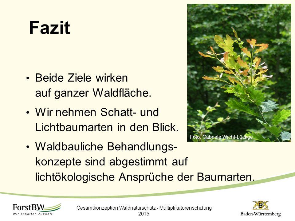 Fazit Beide Ziele wirken auf ganzer Waldfläche. Wir nehmen Schatt- und Lichtbaumarten in den Blick. Waldbauliche Behandlungs- konzepte sind abgestimmt