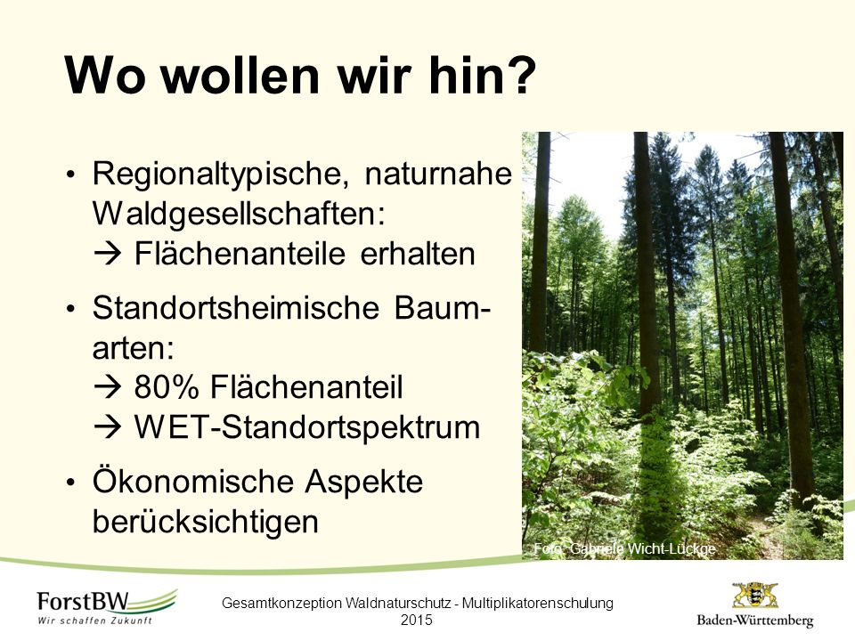 Wo wollen wir hin? Regionaltypische, naturnahe Waldgesellschaften:  Flächenanteile erhalten Standortsheimische Baum- arten:  80% Flächenanteil  WET