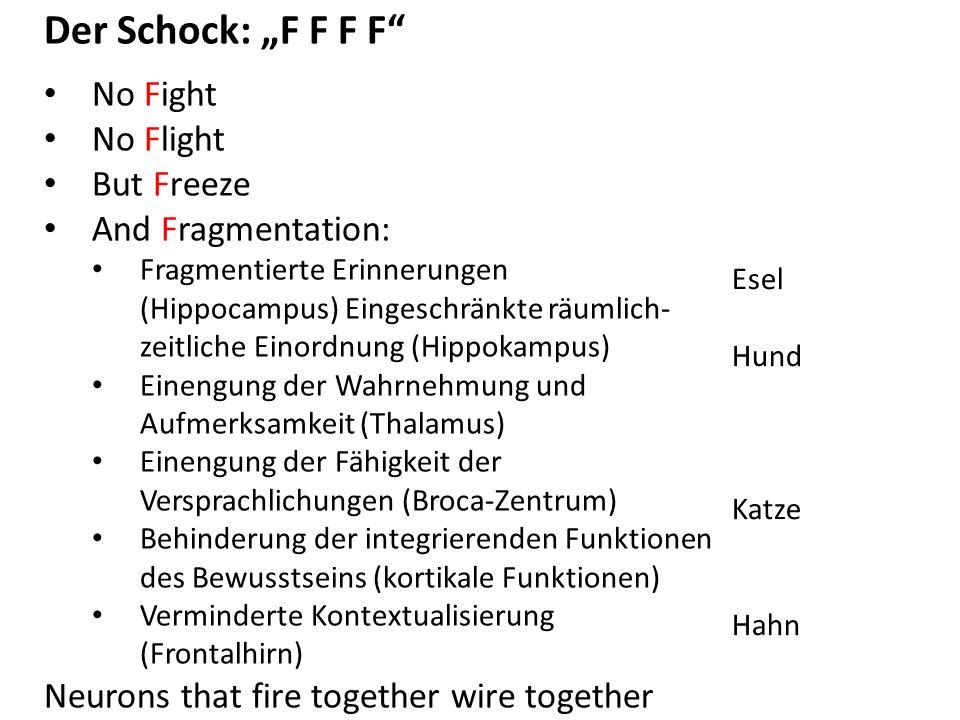"""Der Schock: """"F F F F No Fight No Flight But Freeze And Fragmentation: Fragmentierte Erinnerungen (Hippocampus) Eingeschränkte räumlich- zeitliche Einordnung (Hippokampus) Einengung der Wahrnehmung und Aufmerksamkeit (Thalamus) Einengung der Fähigkeit der Versprachlichungen (Broca-Zentrum) Behinderung der integrierenden Funktionen des Bewusstseins (kortikale Funktionen) Verminderte Kontextualisierung (Frontalhirn) Neurons that fire together wire together Esel Hund Katze Hahn"""