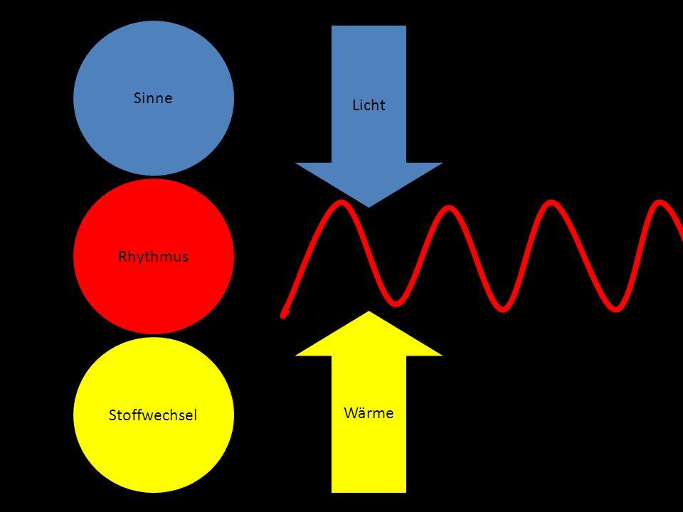 Sinne Rhythmus Stoffwechsel Wärme Licht