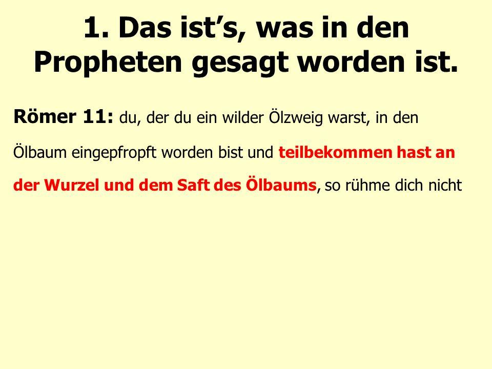 Römer 11: du, der du ein wilder Ölzweig warst, in den Ölbaum eingepfropft worden bist und teilbekommen hast an der Wurzel und dem Saft des Ölbaums, so rühme dich nicht 1.