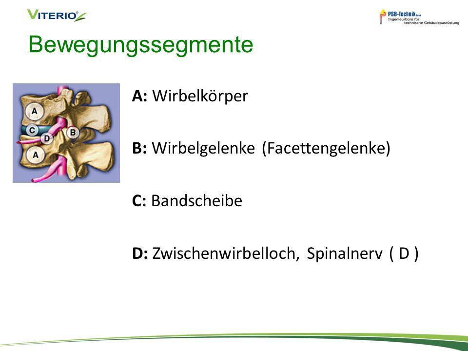 Bewegungssegmente A: Wirbelkörper B: Wirbelgelenke (Facettengelenke) C: Bandscheibe D: Zwischenwirbelloch, Spinalnerv ( D )