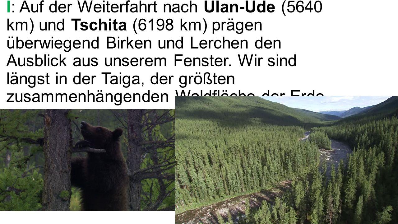 I: Auf der Weiterfahrt nach Ulan-Ude (5640 km) und Tschita (6198 km) prägen überwiegend Birken und Lerchen den Ausblick aus unserem Fenster.