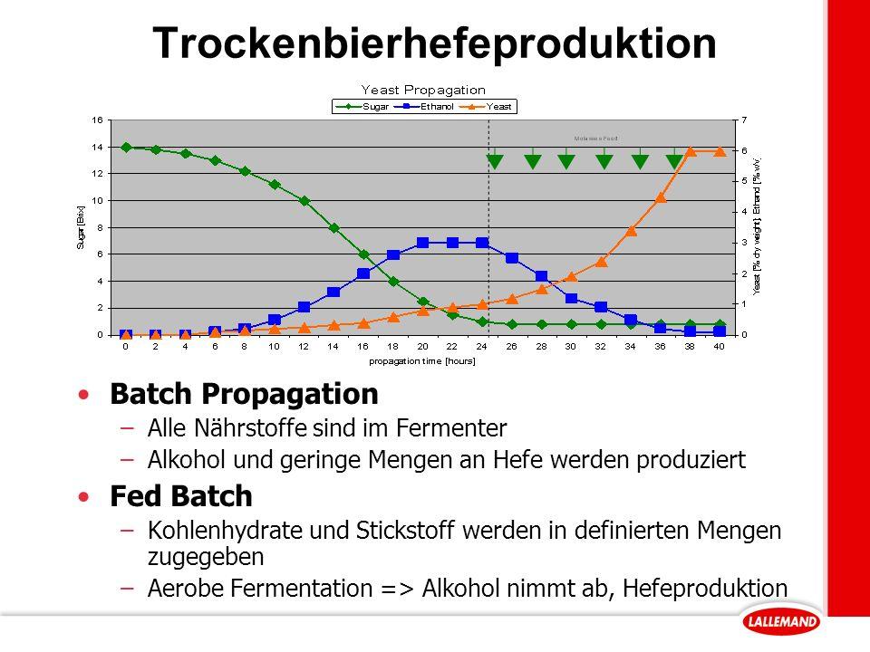 Trockenbierhefeproduktion Batch Propagation –Alle Nährstoffe sind im Fermenter –Alkohol und geringe Mengen an Hefe werden produziert Fed Batch –Kohlenhydrate und Stickstoff werden in definierten Mengen zugegeben –Aerobe Fermentation => Alkohol nimmt ab, Hefeproduktion
