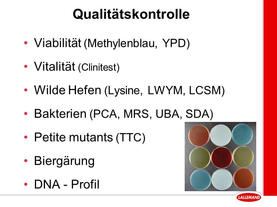 Qualitätskontrolle Viabilität (Methylenblau, YPD) Vitalität (Clinitest) Wilde Hefen (Lysine, LWYM, LCSM) Bakterien (PCA, MRS, UBA, SDA) Petite mutants (TTC) Biergärung DNA - Profil
