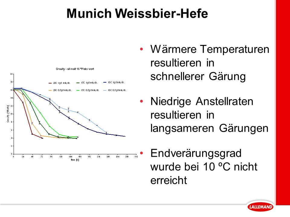 Munich Weissbier-Hefe Wärmere Temperaturen resultieren in schnellerer Gärung Niedrige Anstellraten resultieren in langsameren Gärungen Endverärungsgrad wurde bei 10 ºC nicht erreicht
