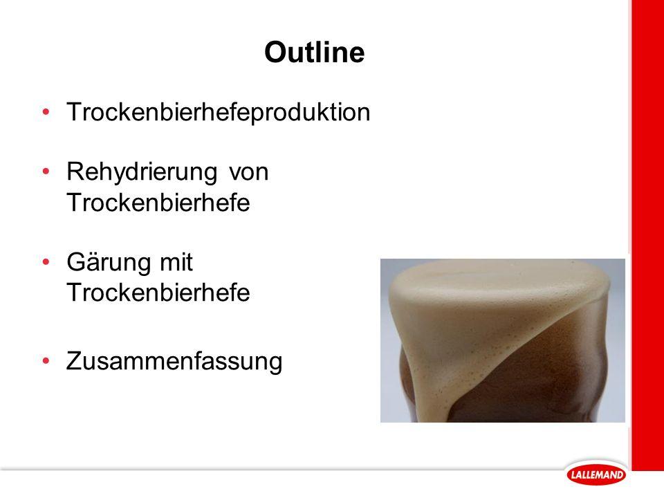 Outline Trockenbierhefeproduktion Rehydrierung von Trockenbierhefe Gärung mit Trockenbierhefe Zusammenfassung