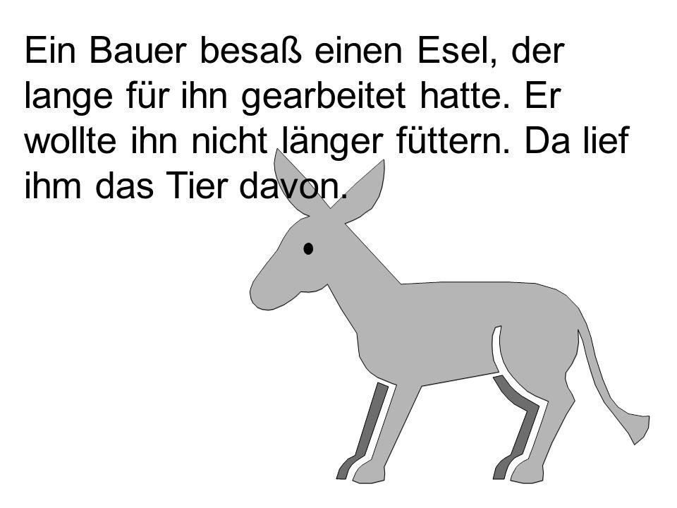 Ein Bauer besaß einen Esel, der lange für ihn gearbeitet hatte. Er wollte ihn nicht länger füttern. Da lief ihm das Tier davon.