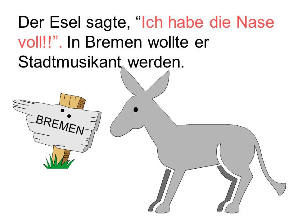 """Der Esel sagte, """"Ich habe die Nase voll!!"""". In Bremen wollte er Stadtmusikant werden. BREMEN"""