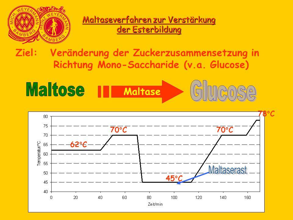 Maltaseverfahren zur Verstärkung der Esterbildung Ziel: Veränderung der Zuckerzusammensetzung in Richtung Mono-Saccharide (v.a. Glucose) Maltase 62°C