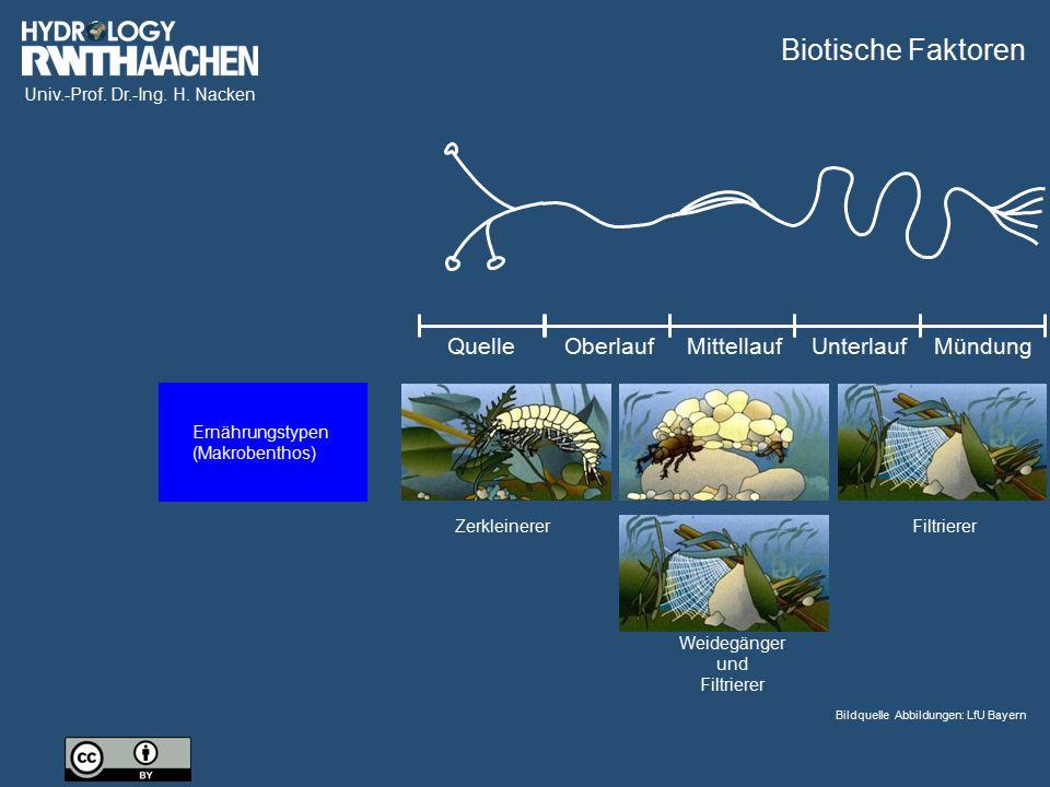 Univ.-Prof. Dr.-Ing. H. Nacken Zerkleinerer Weidegänger und Filtrierer Filtrierer QuelleOberlaufMittellaufUnterlaufMündung Biotische Faktoren Bildquel