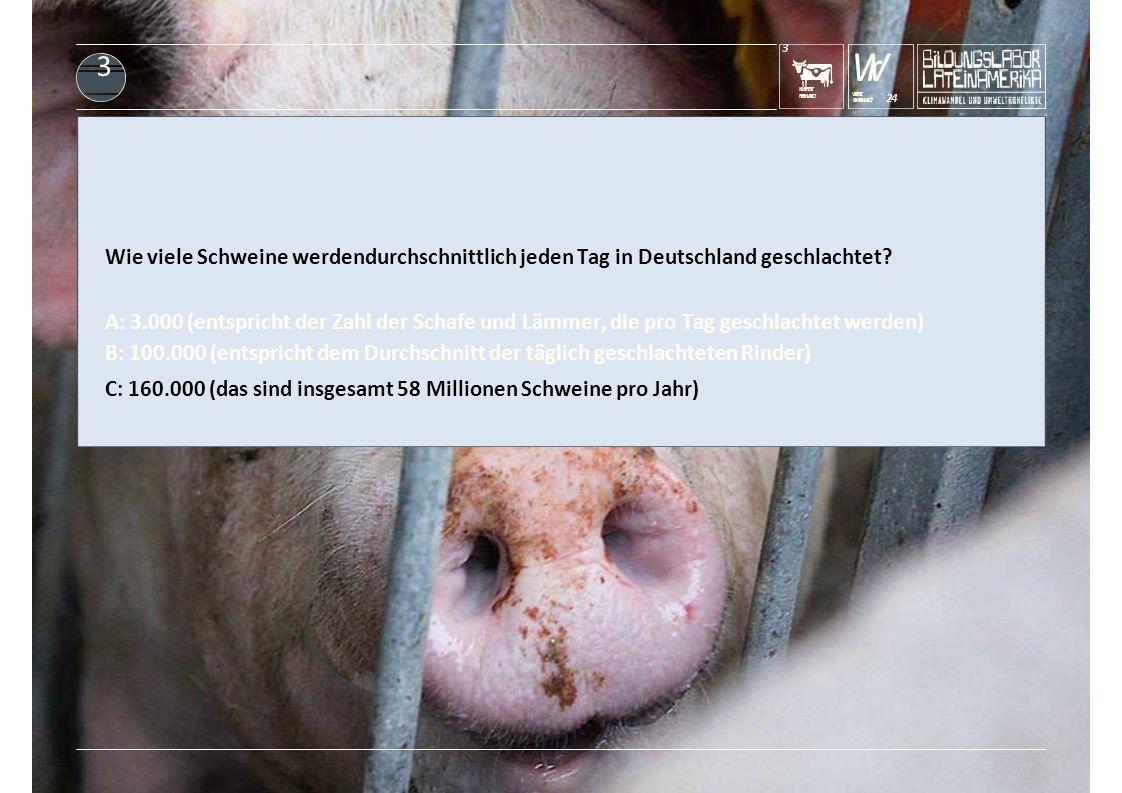 KUHFRISST REGENWALD 3 Wr DENREGENWALD? 24 WERISST 3 Wie viele Schweine werdendurchschnittlich jeden Tag in Deutschland geschlachtet? A: 3.000 (entspri