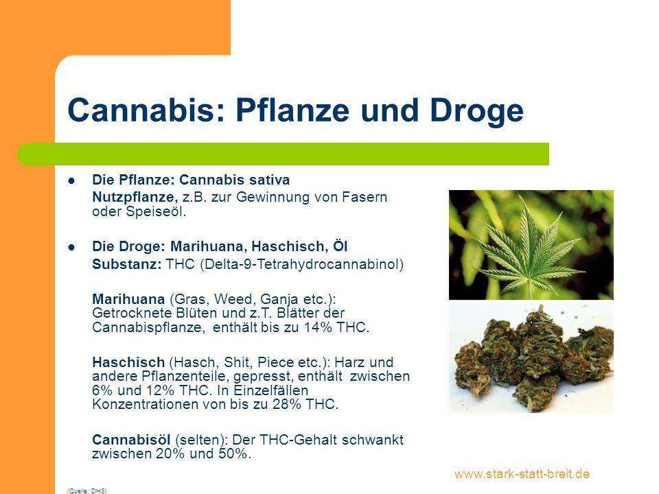 www.stark-statt-breit.de Cannabis: Pflanze und Droge Die Pflanze: Cannabis sativa Nutzpflanze, z.B. zur Gewinnung von Fasern oder Speiseöl. Die Droge: