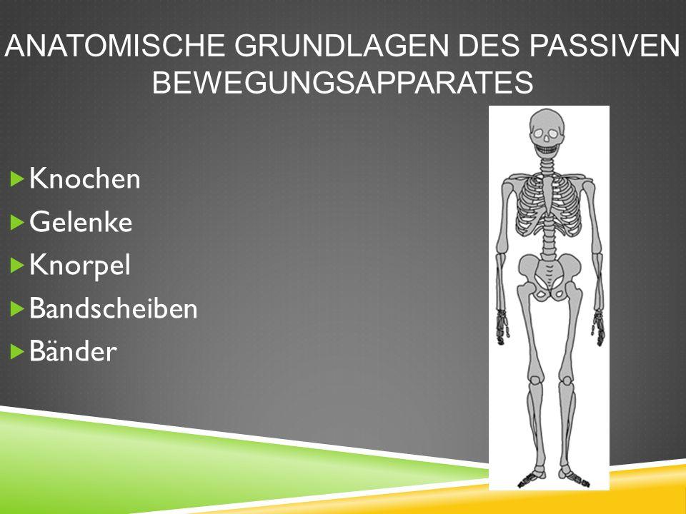 ANATOMISCHE GRUNDLAGEN DES PASSIVEN BEWEGUNGSAPPARATES  Knochen  Gelenke  Knorpel  Bandscheiben  Bänder
