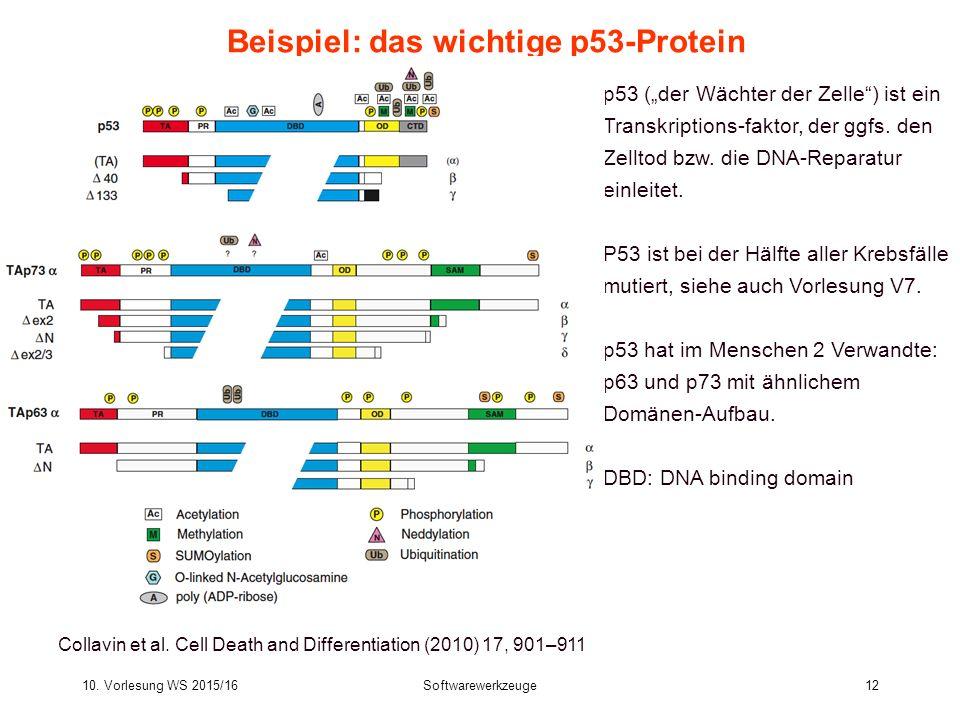 10. Vorlesung WS 2015/16Softwarewerkzeuge12 Beispiel: das wichtige p53-Protein Collavin et al. Cell Death and Differentiation (2010) 17, 901–911 p53 (