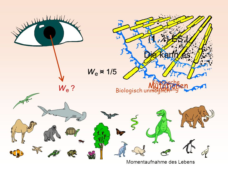 W e > 1/5 W e < 1/5 Mutationen Biologisch unmöglich Kosmische Strahlung W e ? Momentaufnahme des Lebens (1, )-ES ! Die kann es.