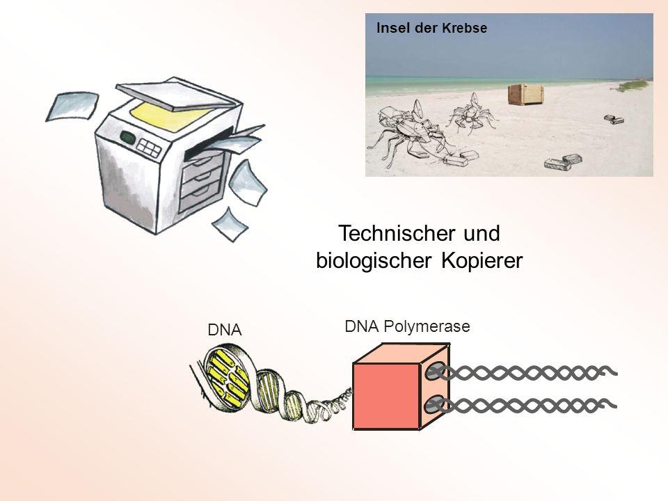 DNA Polymerase DNA Technischer und biologischer Kopierer Insel der Krebse