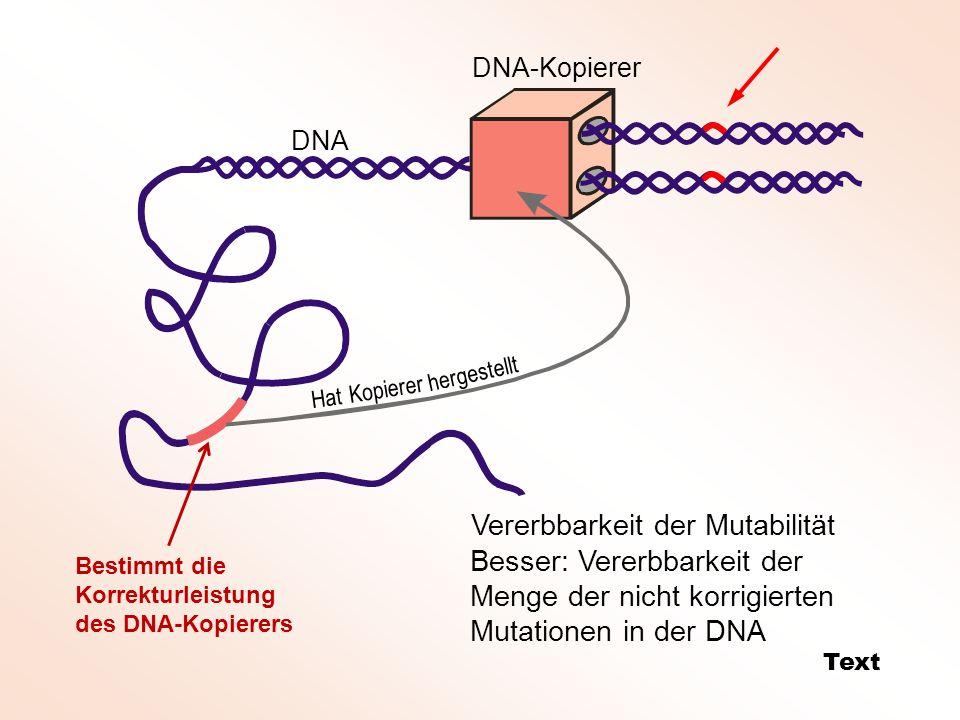 DNA-Kopierer DNA Hat Kopierer hergestellt Vererbbarkeit der Mutabilität Text Besser: Vererbbarkeit der Menge der nicht korrigierten Mutationen in der