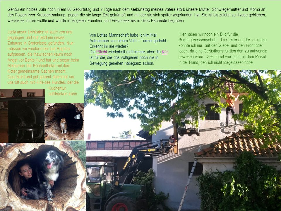 Joda unser Leihkater ist auch von uns gegangen und hat jetzt ein neues Zuhause in Gretenberg gefunden. Nun müssen wir wieder mehr auf Baghira aufpasse