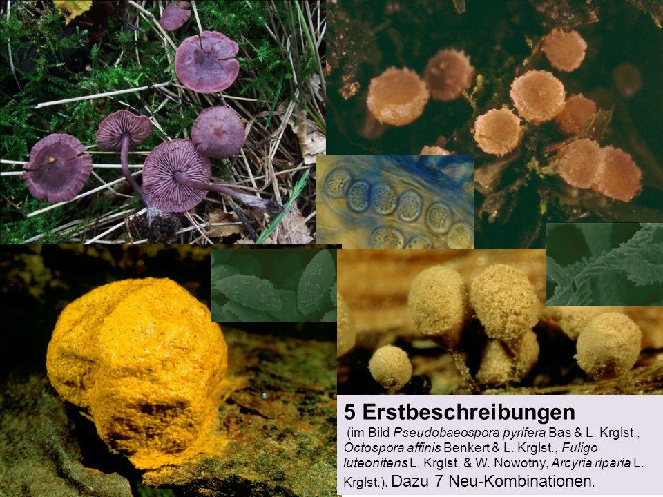 5 Erstbeschreibungen (im Bild Pseudobaeospora pyrifera Bas & L. Krglst., Octospora affinis Benkert & L. Krglst., Fuligo luteonitens L. Krglst. & W. No