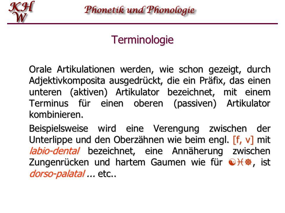 Terminologie Orale Artikulationen werden, wie schon gezeigt, durch Adjektivkomposita ausgedrückt, die ein Präfix, das einen unteren (aktiven) Artikula