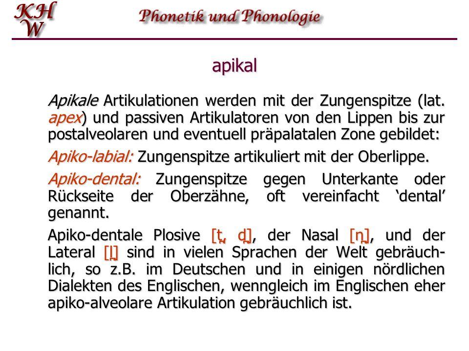 apikal Apikale Artikulationen werden mit der Zungenspitze (lat. apex) und passiven Artikulatoren von den Lippen bis zur postalveolaren und eventuell p