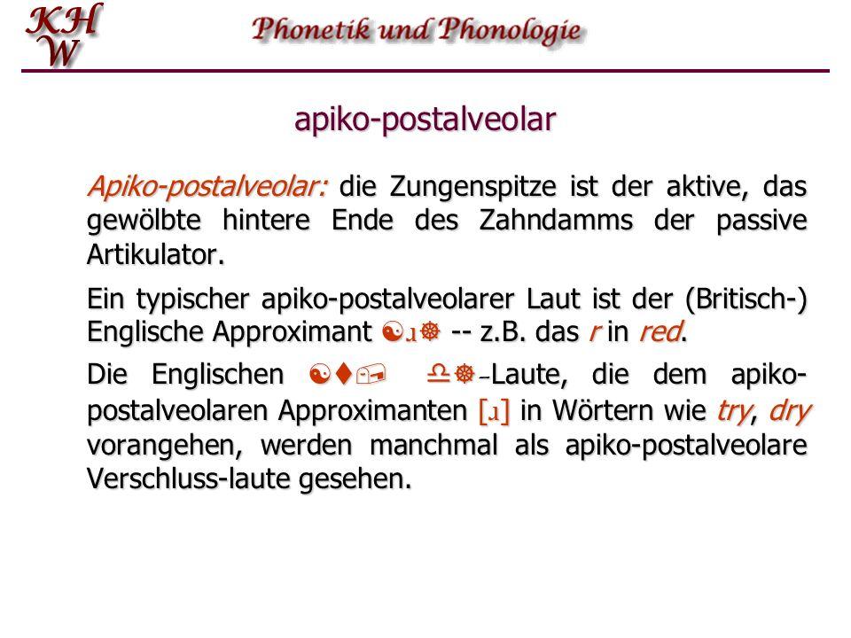 apiko-postalveolar Apiko-postalveolar: die Zungenspitze ist der aktive, das gewölbte hintere Ende des Zahndamms der passive Artikulator. Ein typischer