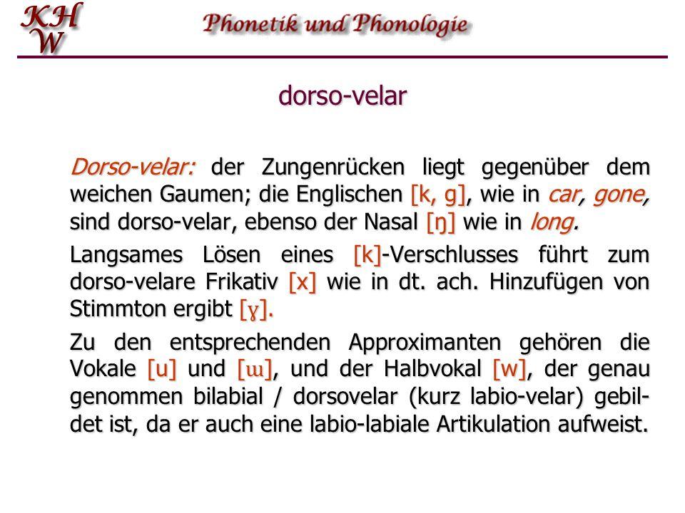 dorso-velar Dorso ‑ velar: der Zungenrücken liegt gegenüber dem weichen Gaumen; die Englischen [k, g], wie in car, gone, sind dorso ‑ velar, ebenso de