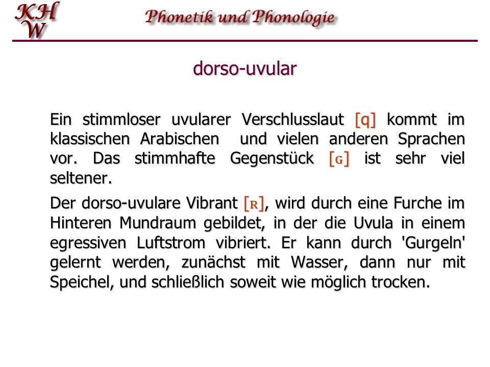 dorso-uvular Ein stimmloser uvularer Verschlusslaut [q] kommt im klassischen Arabischen und vielen anderen Sprachen vor. Das stimmhafte Gegenstück [ ɢ