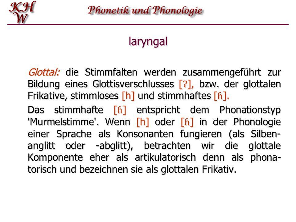 laryngal Glottal: die Stimmfalten werden zusammengeführt zur Bildung eines Glottisverschlusses [], bzw. der glottalen Frikative, stimmloses [h] und st