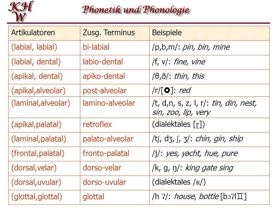ArtikulatorenZusg. TerminusBeispiele (labial, labial)bi-labial : /p,b,m/: pin, bin, mine (labial, dental)labio-dental/f, v/: fine, vine (apikal, denta