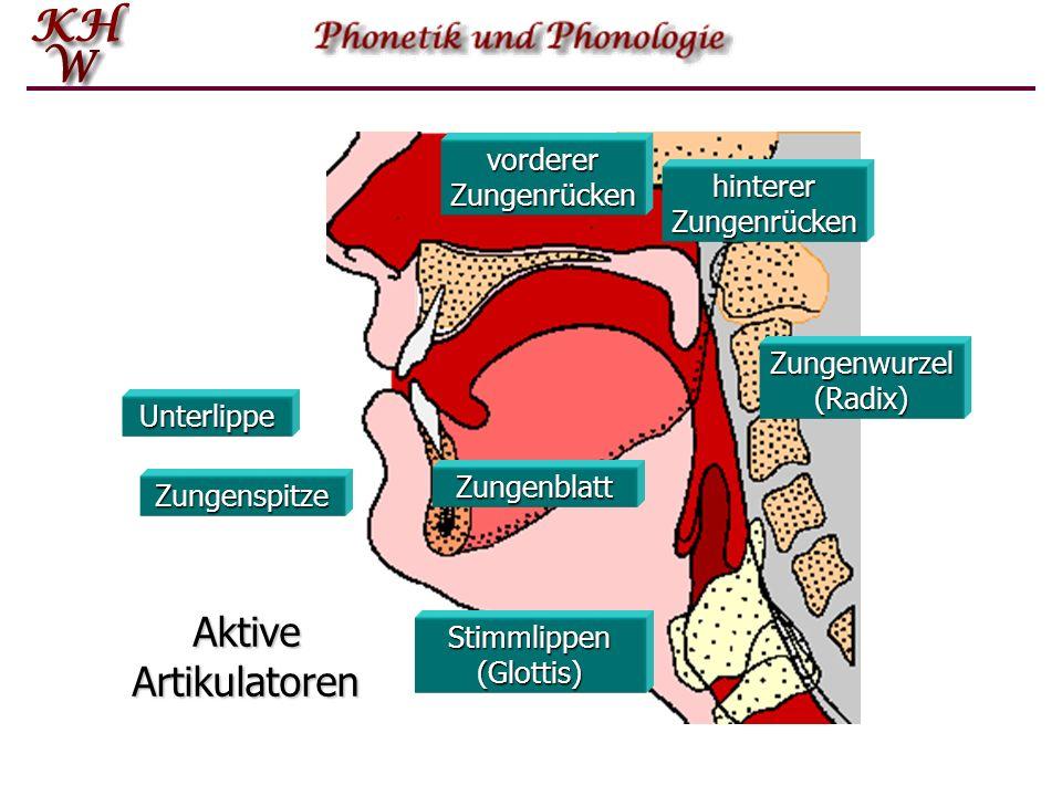 Unterlippe Zungenspitze Zungenblatt vorderer Zungenrücken Stimmlippen (Glottis) Zungenwurzel (Radix) hinterer Zungenrücken Aktive Artikulatoren