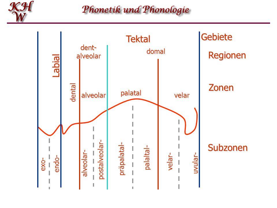 Labial Tektal dent-alveolar domal alveolar dental palatal velar exo- endo- alveolar- postalveolar- präpalatal- palaltal- velar- uvular- Gebiete Region