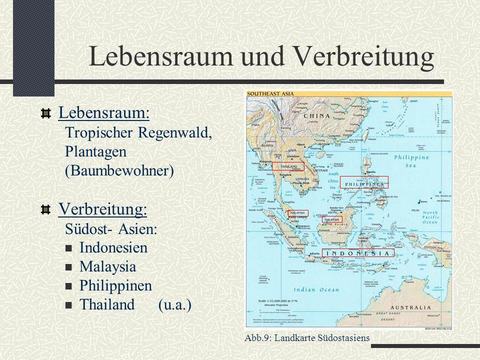 Lebensraum und Verbreitung Lebensraum: Tropischer Regenwald, Plantagen (Baumbewohner) Verbreitung: Südost- Asien: Indonesien Malaysia Philippinen Thai