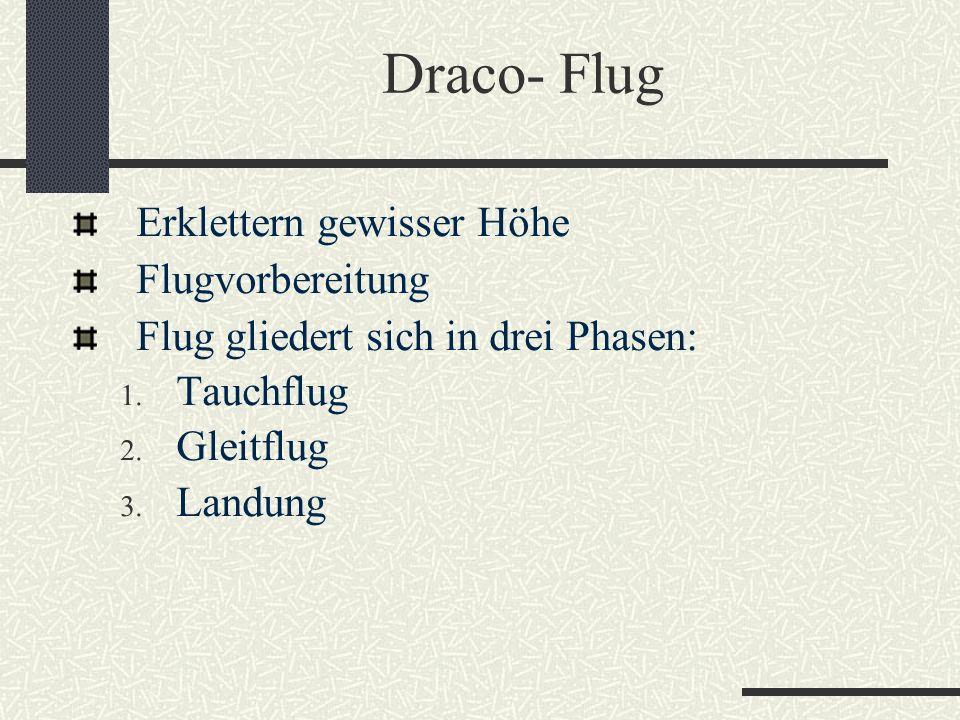 Draco- Flug Erklettern gewisser Höhe Flugvorbereitung Flug gliedert sich in drei Phasen: 1. Tauchflug 2. Gleitflug 3. Landung
