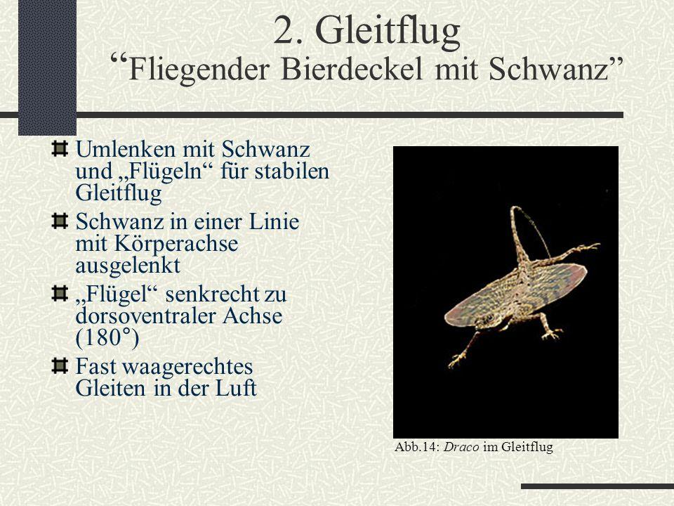 """2. Gleitflug """" Fliegender Bierdeckel mit Schwanz"""" Umlenken mit Schwanz und """"Flügeln"""" für stabilen Gleitflug Schwanz in einer Linie mit Körperachse aus"""