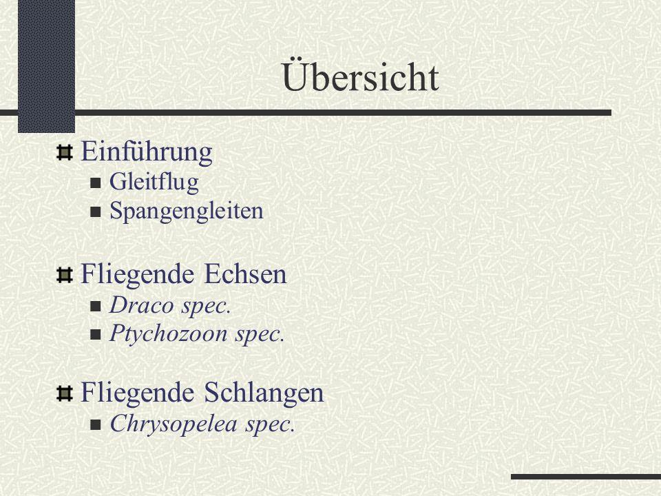Übersicht Einführung Gleitflug Spangengleiten Fliegende Echsen Draco spec. Ptychozoon spec. Fliegende Schlangen Chrysopelea spec.