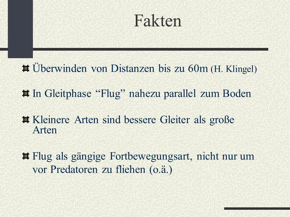 """Fakten Überwinden von Distanzen bis zu 60m (H. Klingel) In Gleitphase """"Flug"""" nahezu parallel zum Boden Kleinere Arten sind bessere Gleiter als große A"""