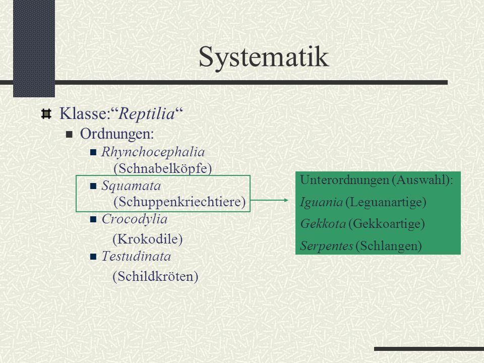 "Systematik Klasse:""Reptilia"" Ordnungen: Rhynchocephalia (Schnabelköpfe) Squamata (Schuppenkriechtiere) Crocodylia (Krokodile) Testudinata (Schildkröte"