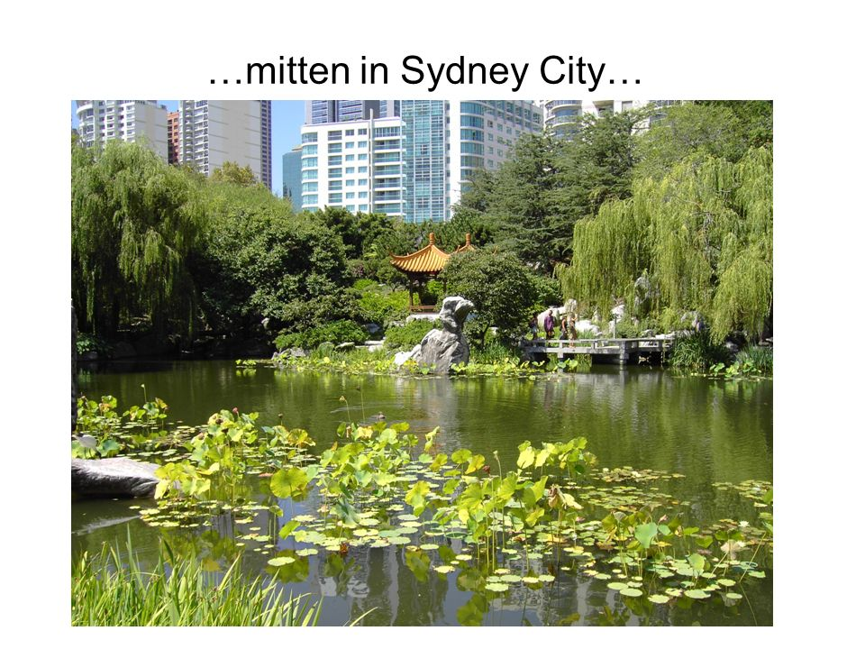 …mitten in Sydney City…