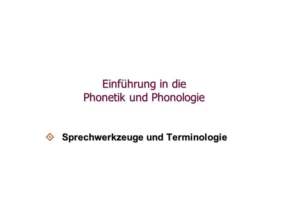 Einführung in die Phonetik und Phonologie  Sprechwerkzeuge und Terminologie
