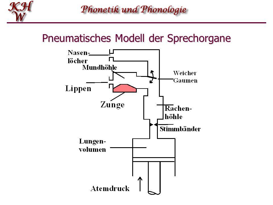 Anatomie der Sprechwerkzeuge Bei der der Charakterisierung einzelner Sprachlaute werden häufig schematische Darstellun- gen verwendet.