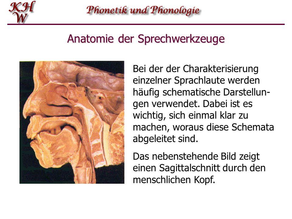 Anatomie der Sprechwerkzeuge Bei der der Charakterisierung einzelner Sprachlaute werden häufig schematische Darstellun- gen verwendet. Dabei ist es wi