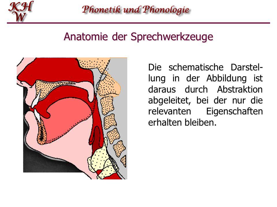 Anatomie der Sprechwerkzeuge Die schematische Darstel- lung in der Abbildung ist daraus durch Abstraktion abgeleitet, bei der nur die relevanten Eigen