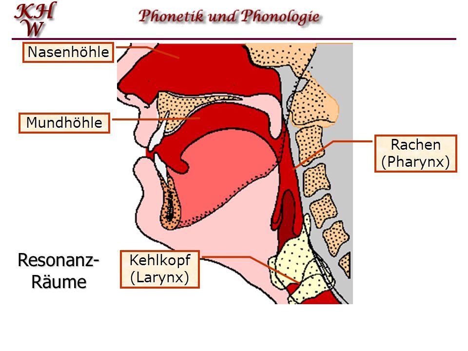 Kehlkopf (Larynx) Rachen (Pharynx) Mundhöhle Nasenhöhle Resonanz- Räume