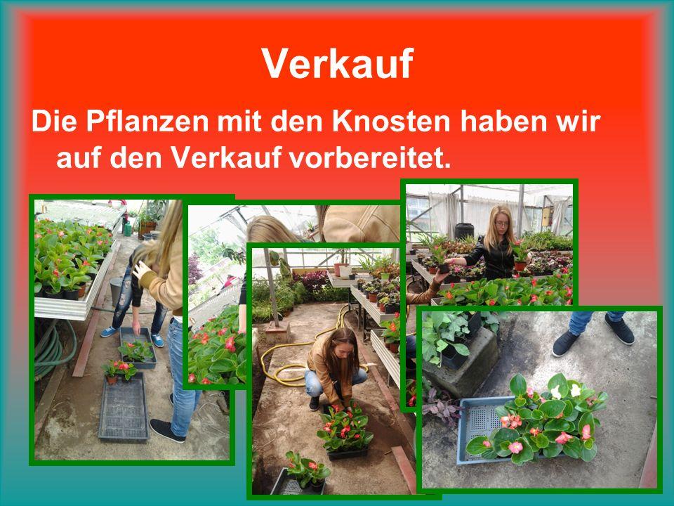 Verkauf Die Pflanzen mit den Knosten haben wir auf den Verkauf vorbereitet.