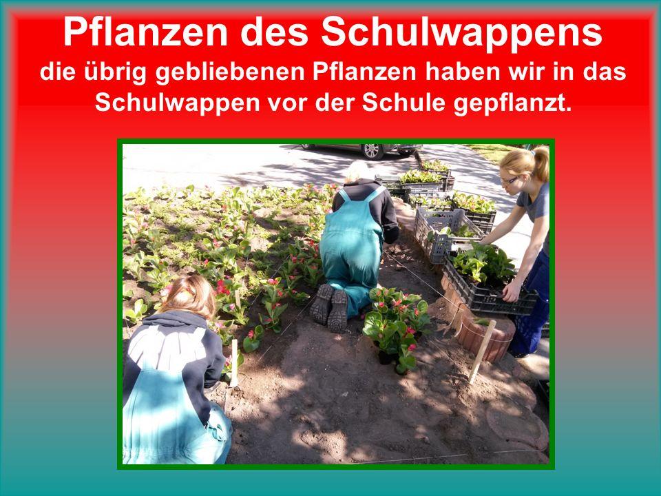 Pflanzen des Schulwappens die übrig gebliebenen Pflanzen haben wir in das Schulwappen vor der Schule gepflanzt.